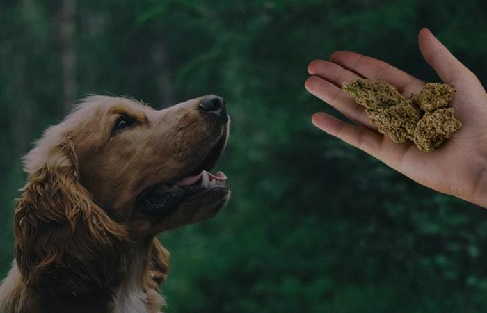 CBD for Pets: All You Need to Know
