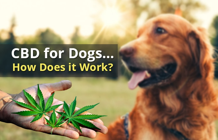 How Does CBD Work for Dogs?