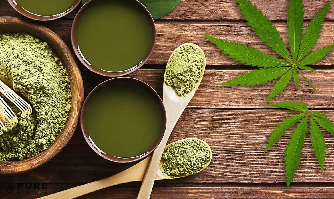 Hemp Protein: All You Need to Know