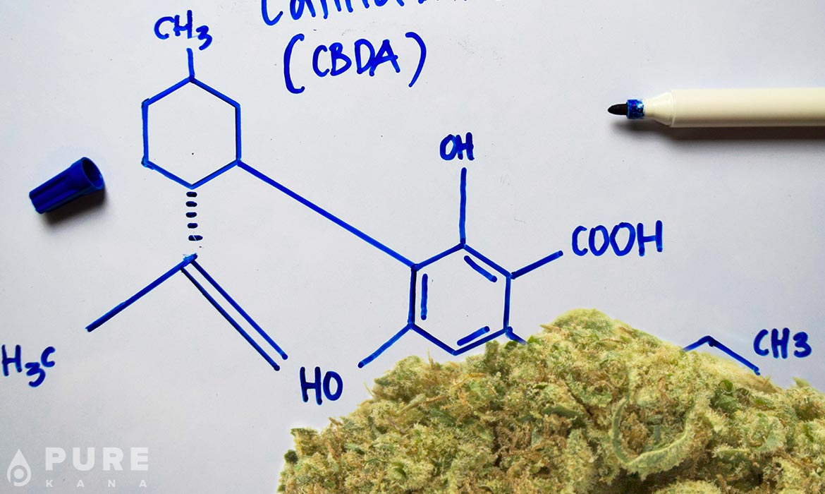 CBDa Cannabinoid 101: The Importance of Carboxyl Groups